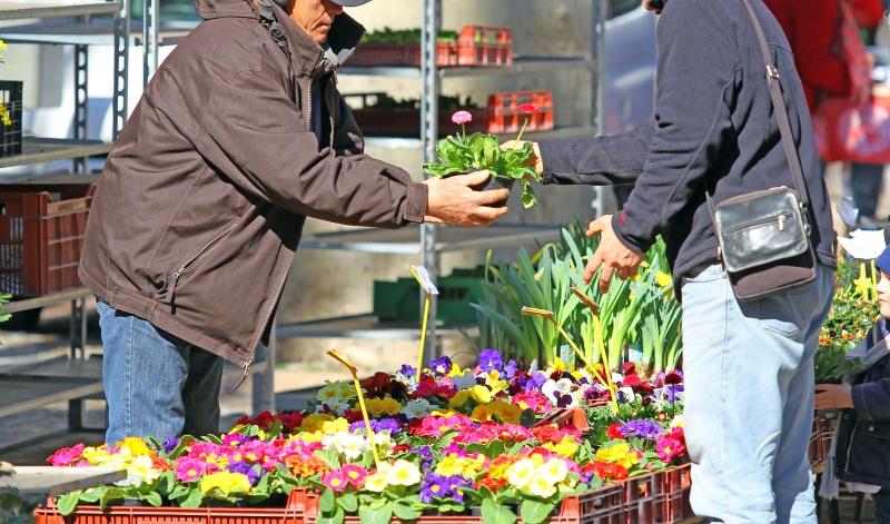 Achat de plantes fleuries
